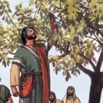 Плоды или листья