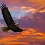 Свобода от Господа